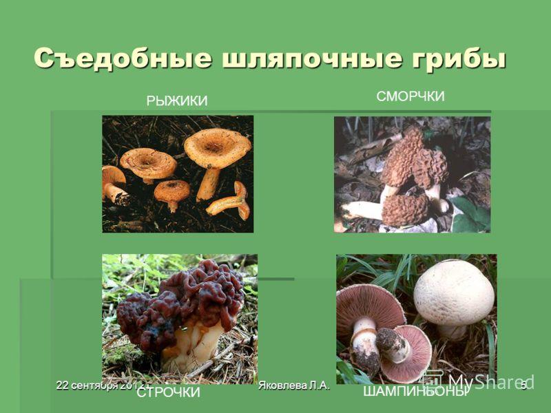 22 сентября 2012 г.22 сентября 2012 г.22 сентября 2012 г.22 сентября 2012 г.Яковлева Л.А.5 Съедобные шляпочные грибы РЫЖИКИ СМОРЧКИ СТРОЧКИ ШАМПИНЬОНЫ