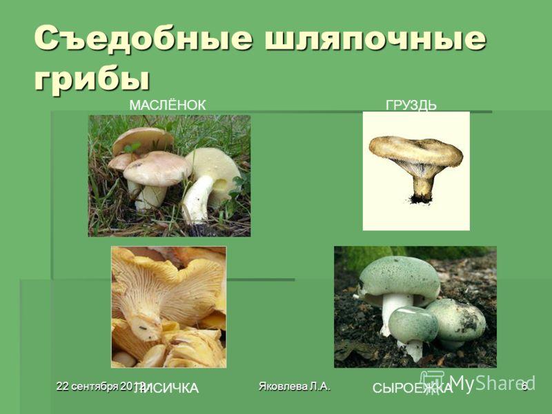 22 сентября 2012 г.22 сентября 2012 г.22 сентября 2012 г.22 сентября 2012 г.Яковлева Л.А.6 Съедобные шляпочные грибы МАСЛЁНОКГРУЗДЬ ЛИСИЧКАСЫРОЕЖКА