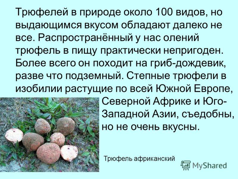 Трюфелей в природе около 100 видов, но выдающимся вкусом обладают далеко не все. Распространённый у нас олений трюфель в пищу практически непригоден. Более всего он походит на гриб-дождевик, разве что подземный. Степные трюфели в изобилии растущие по
