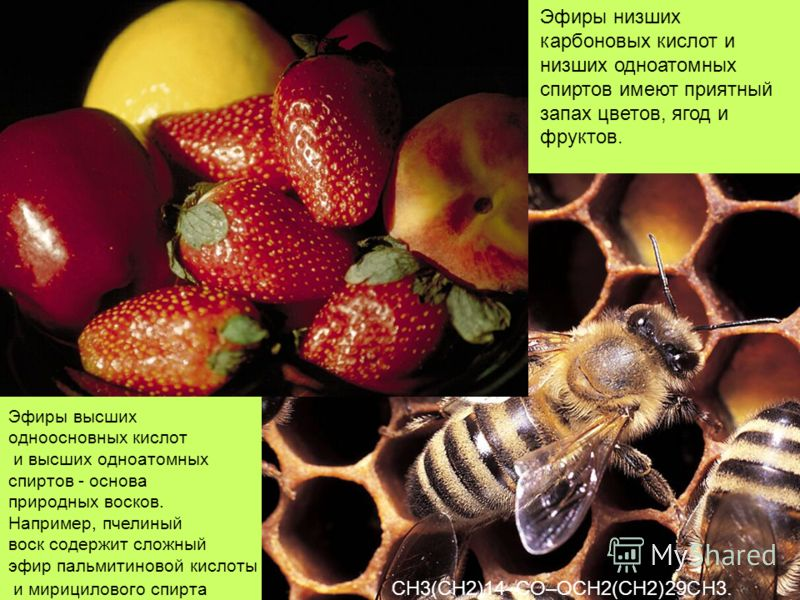 Эфиры низших карбоновых кислот и низших одноатомных спиртов имеют приятный запах цветов, ягод и фруктов. Эфиры высших одноосновных кислот и высших одноатомных спиртов - основа природных восков. Например, пчелиный воск содержит сложный эфир пальмитино