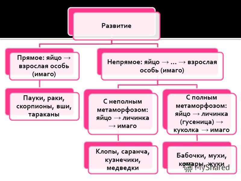 Развитие Прямое: яйцо взрослая особь (имаго) Пауки, раки, скорпионы, вши, тараканы Непрямое: яйцо … взрослая особь (имаго) С неполным метаморфозом: яйцо личинка имаго Клопы, саранча, кузнечики, медведки С полным метаморфозом: яйцо личинка (гусеница)