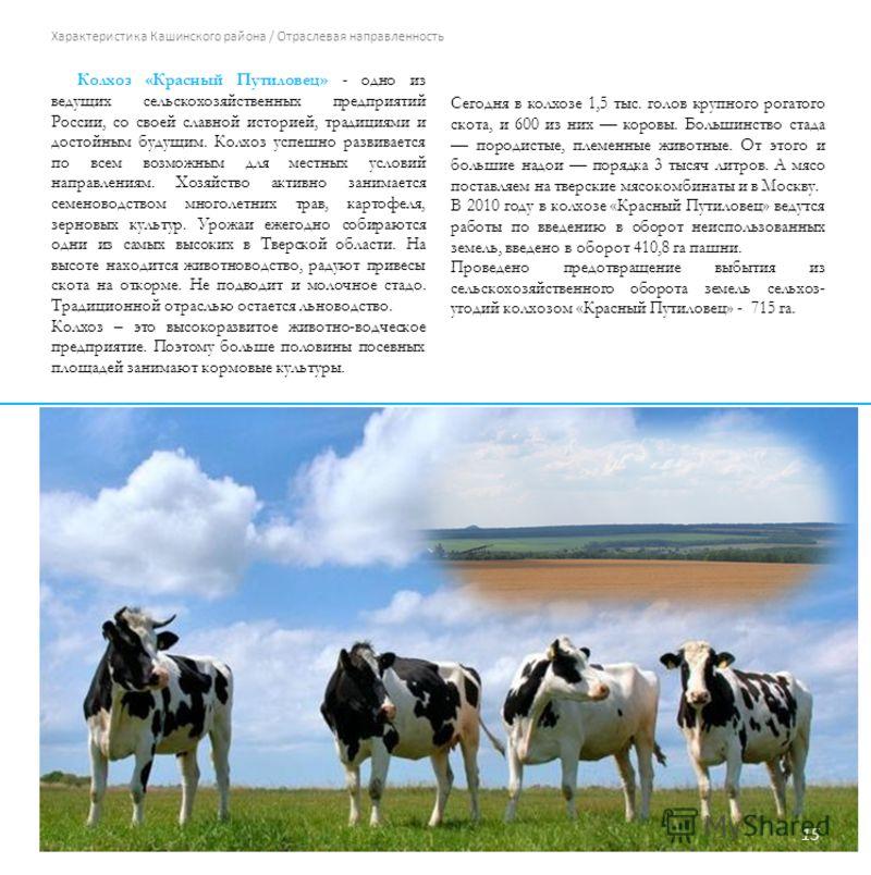 Характеристика Кашинского района / Отраслевая направленность Колхоз «Красный Путиловец» - одно из ведущих сельскохозяйственных предприятий России, со своей славной историей, традициями и достойным будущим. Колхоз успешно развивается по всем возможным