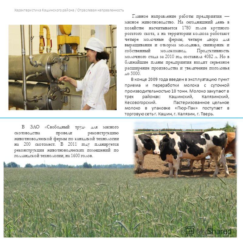 Характеристика Кашинского района / Отраслевая направленность Главное направление работы предприятия мясное животноводство. На сегодняшний день в хозяйстве насчитывается 1780 голов крупного рогатого скота, а на территории колхоза работают четыре молоч