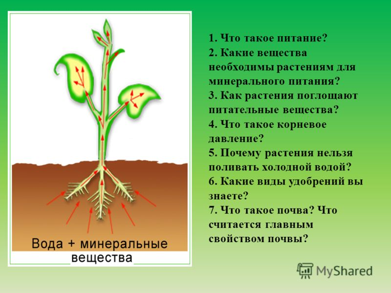 1. Что такое питание? 2. Какие вещества необходимы растениям для минерального питания? 3. Как растения поглощают питательные вещества? 4. Что такое корневое давление? 5. Почему растения нельзя поливать холодной водой? 6. Какие виды удобрений вы знает