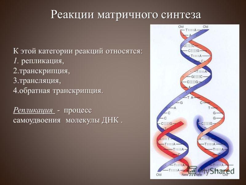 К этой категории реакций относятся: 1. репликация, 2. транскрипция, 3. трансляция, 4. обратная транскрипция. Репликация - процесс самоудвоения молекулы ДНК. Реакции матричного синтеза