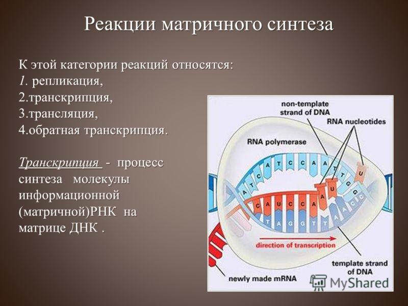 К этой категории реакций относятся: 1. репликация, 2. транскрипция, 3. трансляция, 4. обратная транскрипция. Транскрипция - процесс синтеза молекулы информационной (матричной)РНК на матрице ДНК. Реакции матричного синтеза