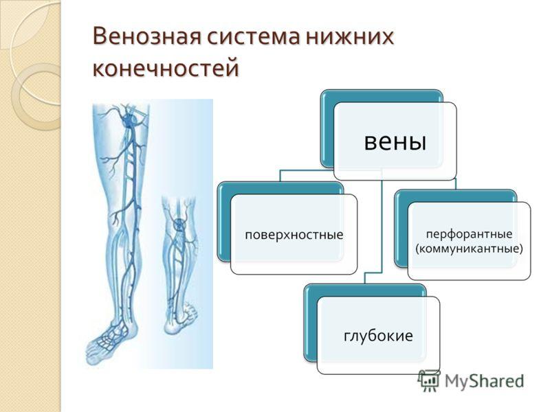 Варикозная болезнь нижних конечностей это