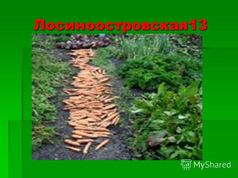 Лосиноостровская13 Лосиноостровская13