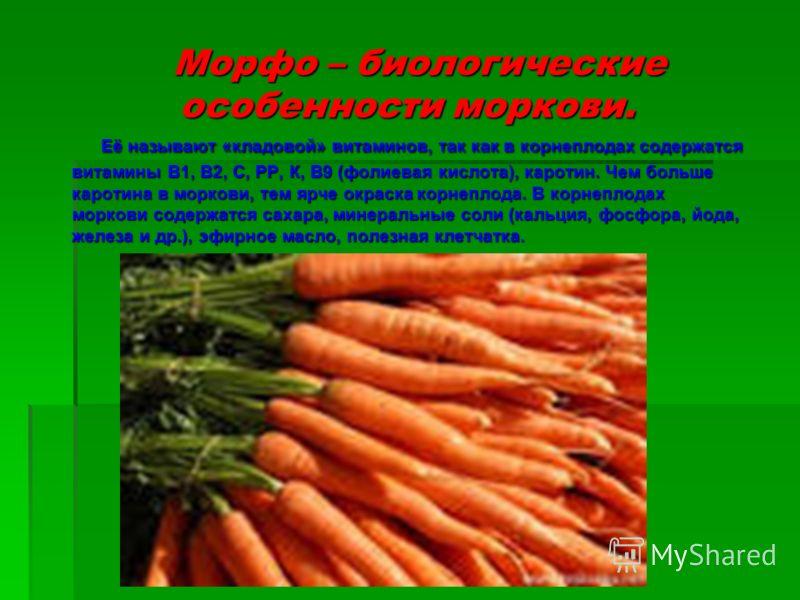 Морфо – биологические особенности моркови. Морфо – биологические особенности моркови. Её называют «кладовой» витаминов, так как в корнеплодах содержатся витамины В1, В2, С, РР, К, В9 (фолиевая кислота), каротин. Чем больше каротина в моркови, тем ярч