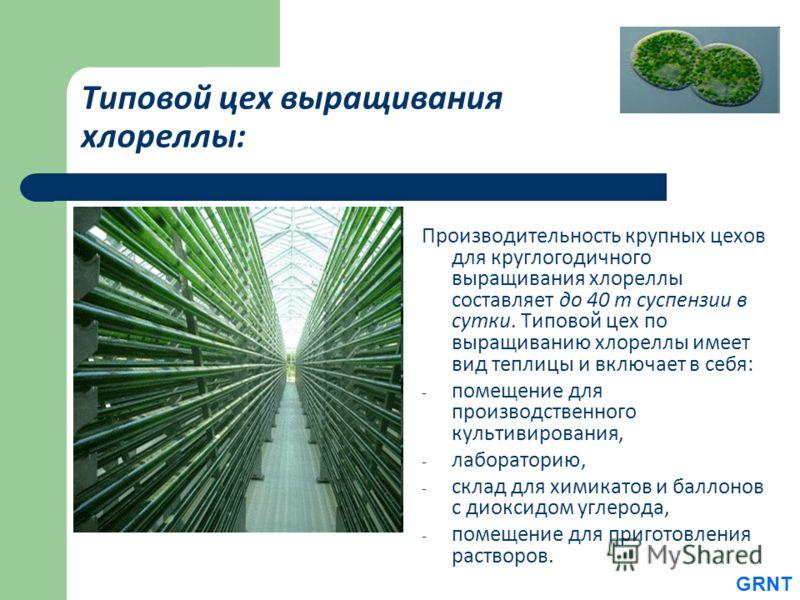 Типовой цех выращивания хлореллы: Производительность крупных цехов для круглогодичного выращивания хлореллы составляет до 40 т суспензии в сутки. Типовой цех по выращиванию хлореллы имеет вид теплицы и включает в себя: - помещение для производственно