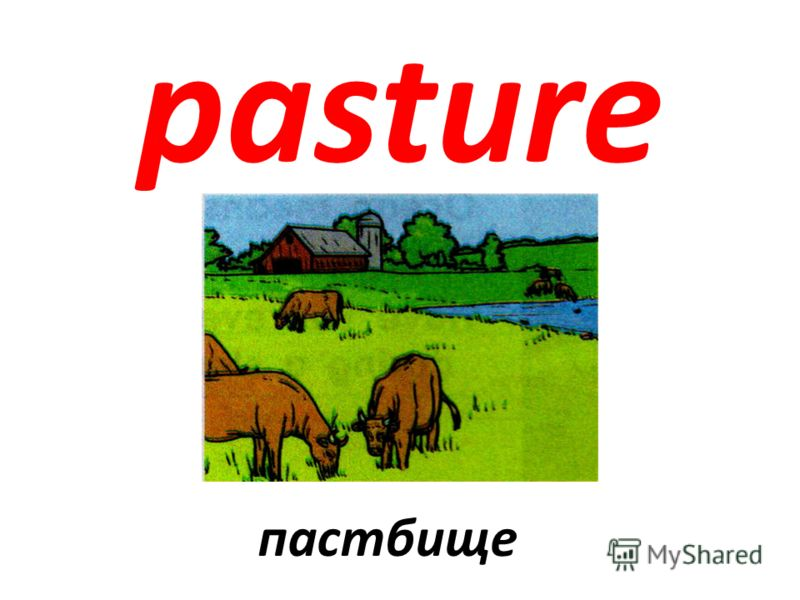 pasture пастбище