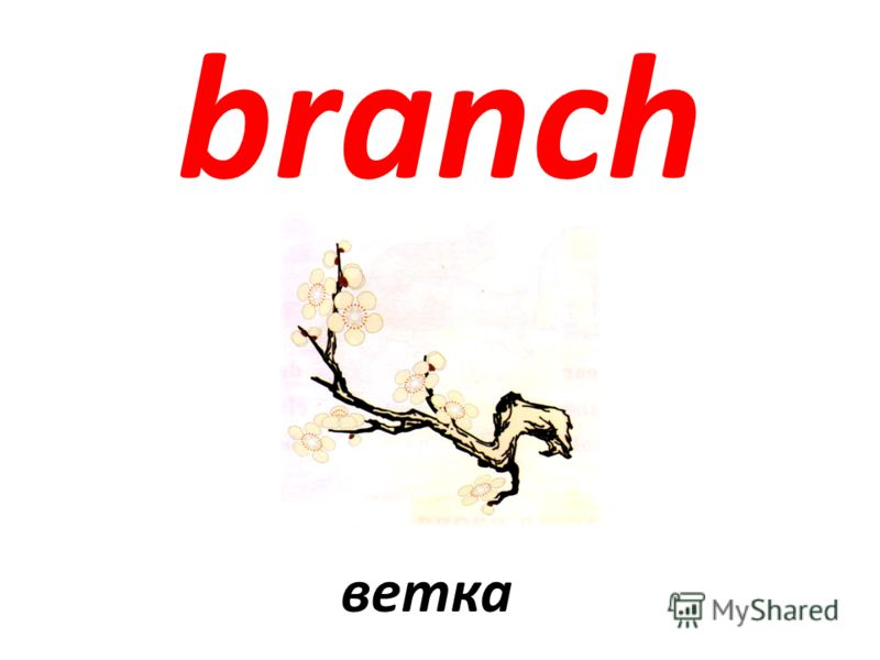 branch ветка