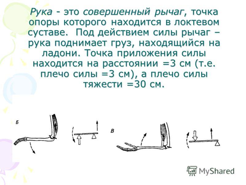 Рука - это совершенный рычаг, точка опоры которого находится в локтевом суставе. Под действием силы рычаг – рука поднимает груз, находящийся на ладони. Точка приложения силы находится на расстоянии =3 см (т.е. плечо силы =3 см), а плечо силы тяжести