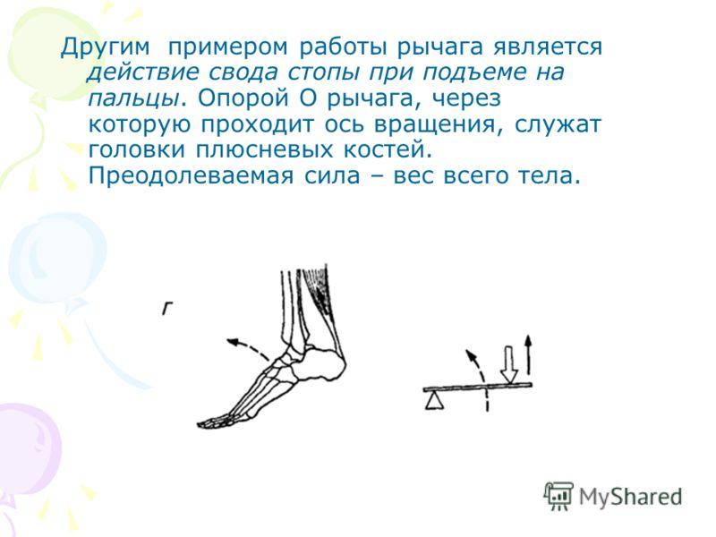 Другим примером работы рычага является действие свода стопы при подъеме на пальцы. Опорой О рычага, через которую проходит ось вращения, служат головки плюсневых костей. Преодолеваемая сила – вес всего тела.
