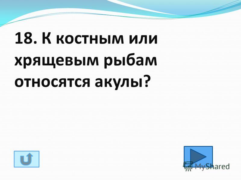 18. К костным или хрящевым рыбам относятся акулы?