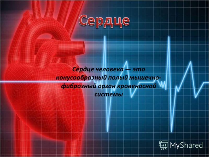 Сердце человека это конусообразный полый мышечно- фиброзный орган кровеносной системы