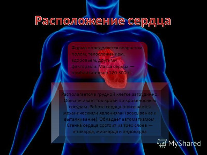 Располагается в грудной клетке загрудинно. Обеспечивает ток крови по кровеносным сосудам. Работа сердца описывается механическими явлениями (всасывание и выталкивание). Обладает автоматизмом. Стенка сердца состоит из трех слоев эпикарда, миокарда и э