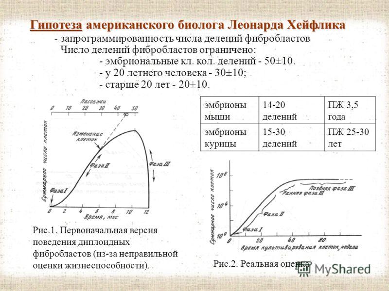 IV. Гипотезы, объясняющие механизмы старения. 2. Гипотезы, представляющие научную ценность. Старениегенетическим контролем Старение находится под прямым генетическим контролем (генов или генетических программ) Но! Коэффициент наследуемости - мера схо