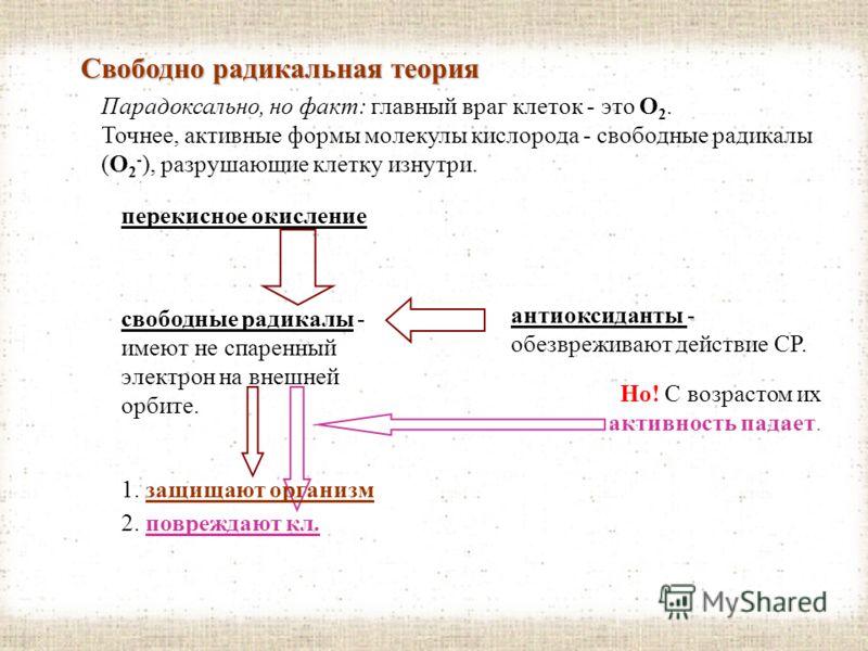 Гипотеза маргинотомии (клеточное деление и теломеры) теломеров В 1988 году в Калифорнийском университете подтверждена гипотеза А. М. Оловникова о защитной роли теломеров (концевых участков хромосом). При клеточном делении ДНК сначала развертывается,