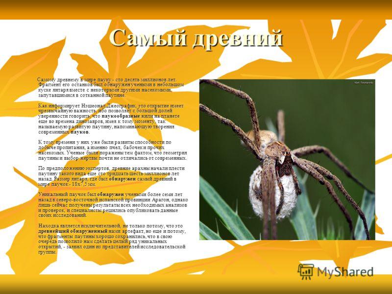 Самый древний Самому древнему в мире пауку - сто десять миллионов лет. Фрагмент его останков был обнаружен учеными в небольшом куске янтаря вместе с некоторыми другими насекомыми, запутавшимися в сотканной паутине. Как информирует Нэшеонал Джеографик