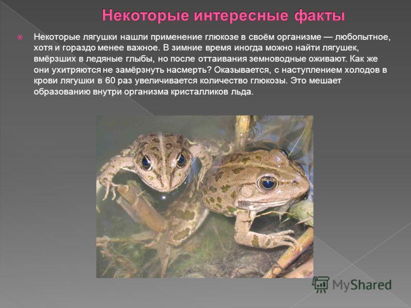 Некоторые лягушки нашли применение глюкозе в своём организме любопытное, хотя и гораздо менее важное. В зимние время иногда можно найти лягушек, вмёрзших в ледяные глыбы, но после оттаивания земноводные оживают. Как же они ухитряются не замёрзнуть на