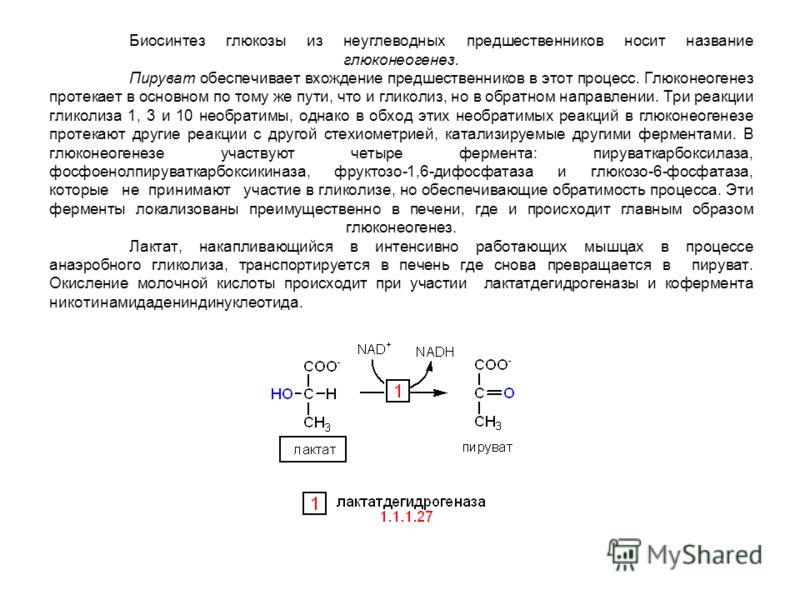 Биосинтез глюкозы из неуглеводных предшественников носит название глюконеогенез. Пируват обеспечивает вхождение предшественников в этот процесс. Глюконеогенез протекает в основном по тому же пути, что и гликолиз, но в обратном направлении. Три реакци