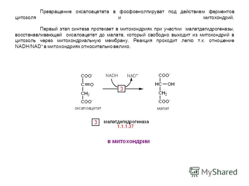 Превращение оксалоацетата в фосфоенолпируват под действием ферментов цитозоля и митохондрий. Первый этап синтеза протекает в митохондриях при участии малатдегидрогеназы, восстанавливающей оксалоацетат до малата, который свободно выходит из митохондри