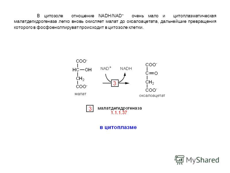 В цитозоле отношение NADH/NAD + очень мало и цитоплазматическая малатдегидрогеназа легко вновь окисляет малат до оксалоацетата, дальнейшие превращения которого в фосфоенолпируват происходит в цитозоле клетки.