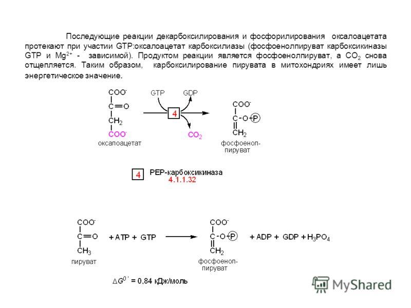 Последующие реакции декарбоксилирования и фосфорилирования оксалоацетата протекают при участии GTP:оксалоацетат карбоксилиазы (фосфоенолпируват карбоксикиназы GTP и Mg 2+ - зависимой). Продуктом реакции является фосфоенолпируват, а СО 2 снова отщепля