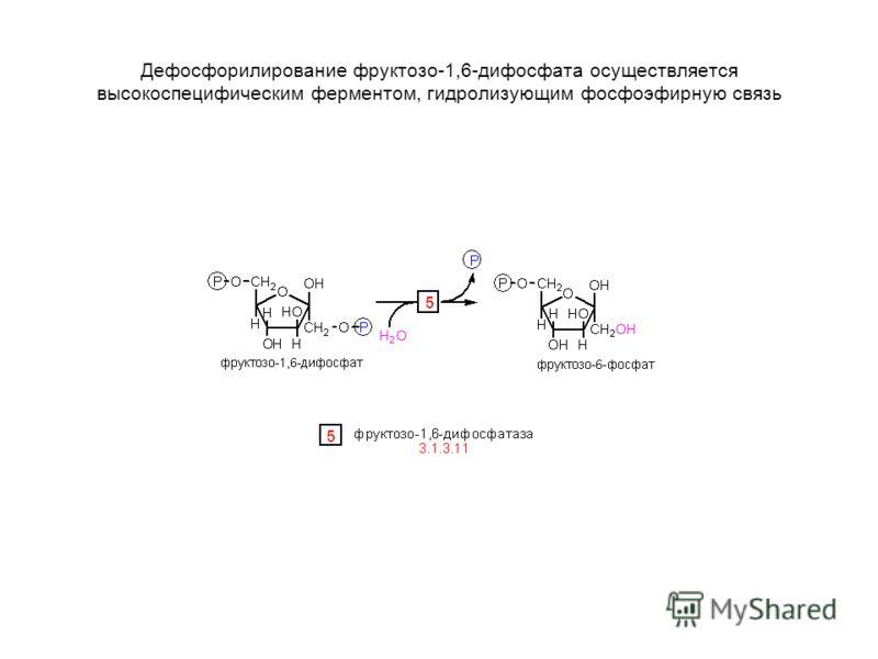 Дефосфорилирование фруктозо-1,6-дифосфата осуществляется высокоспецифическим ферментом, гидролизующим фосфоэфирную связь