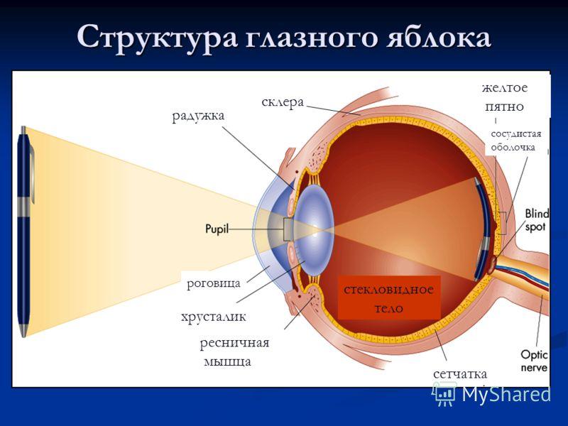 Пятно Глазное фото