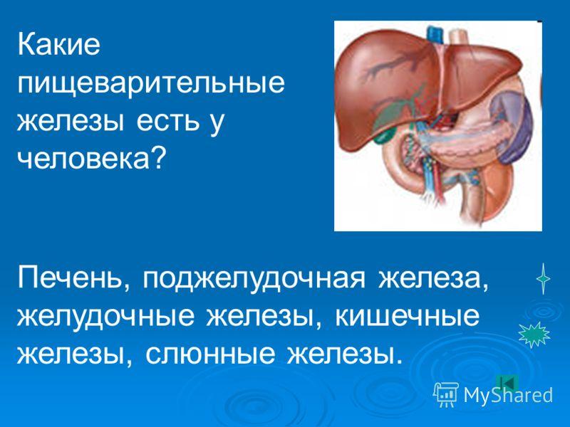 Какие пищеварительные железы есть у человека? Печень, поджелудочная железа, желудочные железы, кишечные железы, слюнные железы.