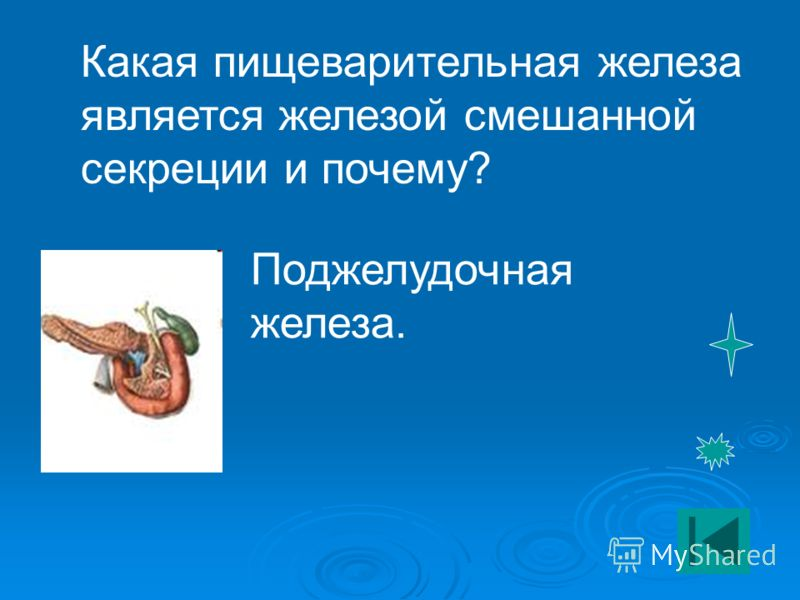Какая пищеварительная железа является железой смешанной секреции и почему? Поджелудочная железа.