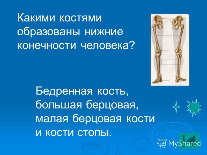 Нижние конечности человека