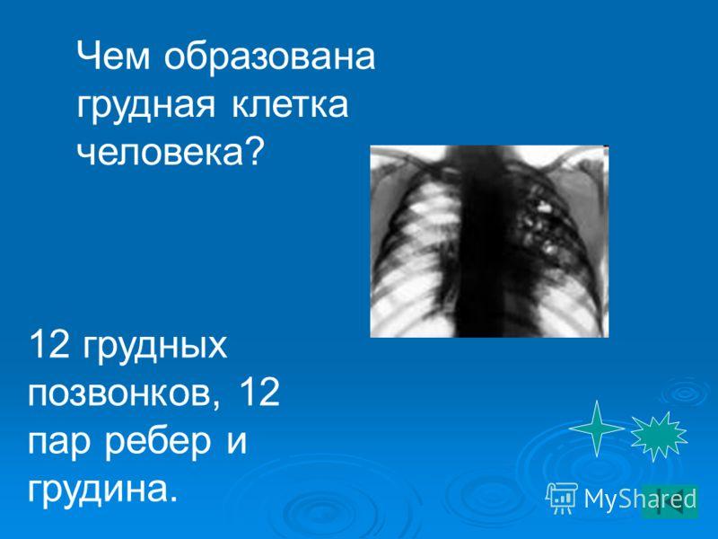 Чем образована грудная клетка человека? 12 грудных позвонков, 12 пар ребер и грудина.