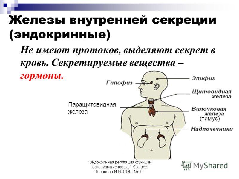 Эндокринная регуляция функций организма человека 9 класс Топалова И.И. СОШ 12 Железы внутренней секреции (эндокринные) Не имеют протоков, выделяют секрет в кровь. Секретируемые вещества – гормоны. (тимус) Паращитовидная железа