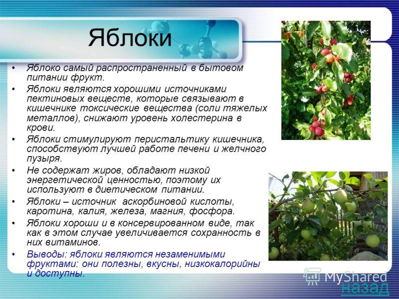 Яблоки Яблоко самый распространенный в бытовом питании фрукт. Яблоки являются хорошими источниками пектиновых веществ, которые связывают в кишечнике токсические вещества (соли тяжелых металлов), снижают уровень холестерина в крови. Яблоки стимулируют