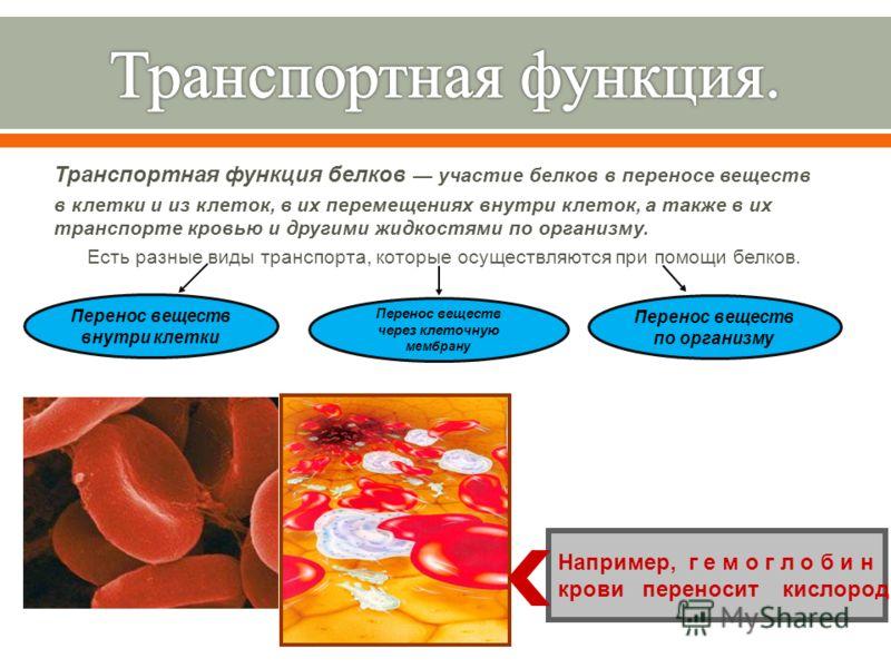 Транспортная функция белков участие белков в переносе веществ в клетки и из клеток, в их перемещениях внутри клеток, а также в их транспорте кровью и другими жидкостями по организму. Есть разные виды транспорта, которые осуществляются при помощи белк
