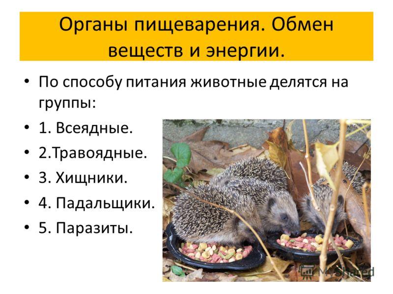 По способу питания животные делятся на группы: 1. Всеядные. 2.Травоядные. 3. Хищники. 4. Падальщики. 5. Паразиты.