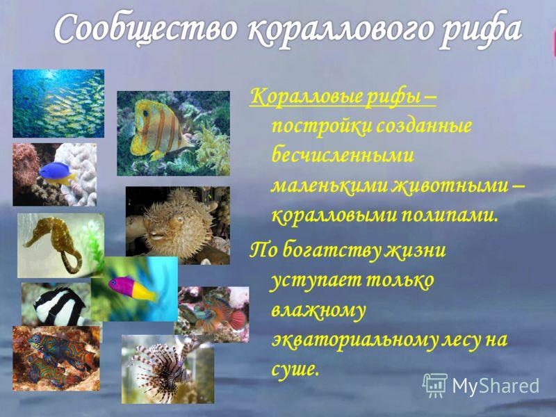 Богато видами. Складывается на небольших глубинах. Представители сообщества питаются водорослями, представителями мелких животных, остатками организмов.