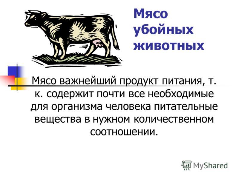 Мясо убойных животных Мясо важнейший продукт питания, т. к. содержит почти все необходимые для организма человека питательные вещества в нужном количественном соотношении.
