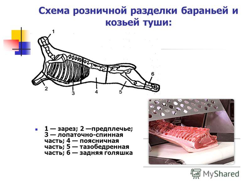 Схема розничной разделки бараньей и козьей туши: 1 зарез; 2 предплечье; 3 лопаточно-спинная часть; 4 поясничная часть; 5 тазобедренная часть; 6 задняя голяшка