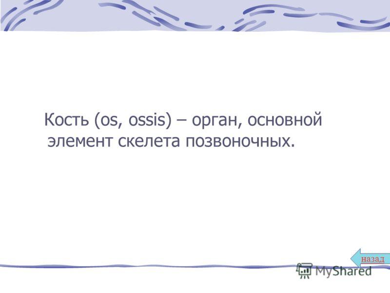 Кость (os, ossis) – орган, основной элемент скелета позвоночных. назад