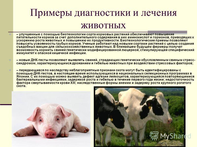 Примеры диагностики и лечения животных – улучшенные с помощью биотехнологии сорта кормовых растений обеспечивают повышение питательности кормов за счет дополнительного содержания в них аминокислот и гормонов, приводящих к ускорению роста животных и п