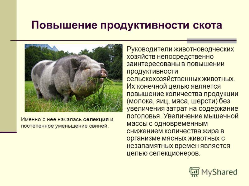 Руководители животноводческих хозяйств непосредственно заинтересованы в повышении продуктивности сельскохозяйственных животных. Их конечной целью является повышение количества продукции (молока, яиц, мяса, шерсти) без увеличения затрат на содержание