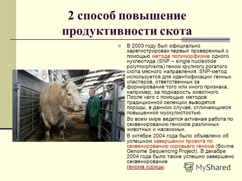 2 способ повышение продуктивности скота В 2003 году был официально зарегистрирован первый проверенный с помощью метода полиморфизма одного нуклеотида (SNP – single nucleotide polymorphisms) геном крупного рогатого скота мясного направления. SNP-метод