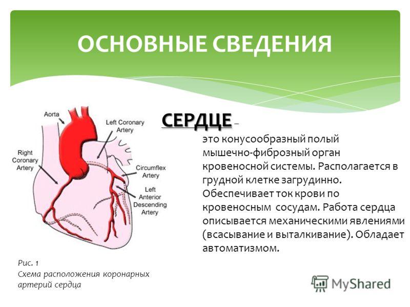 ОСНОВНЫЕ СВЕДЕНИЯ СЕРДЦЕ СЕРДЦЕ – это конусообразный полый мышечно-фиброзный орган кровеносной системы. Располагается в грудной клетке загрудинно. Обеспечивает ток крови по кровеносным сосудам. Работа сердца описывается механическими явлениями (всасы