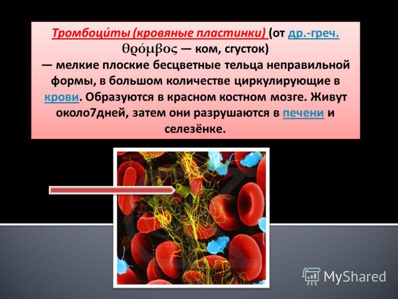 Тромбоци́ты (кровяные пластинки) (от др.-греч. θρόμβος ком, сгусток)др.-греч. мелкие плоские бесцветные тельца неправильной формы, в большом количестве циркулирующие в крови. Образуются в красном костном мозге. Живут около7дней, затем они разрушаются