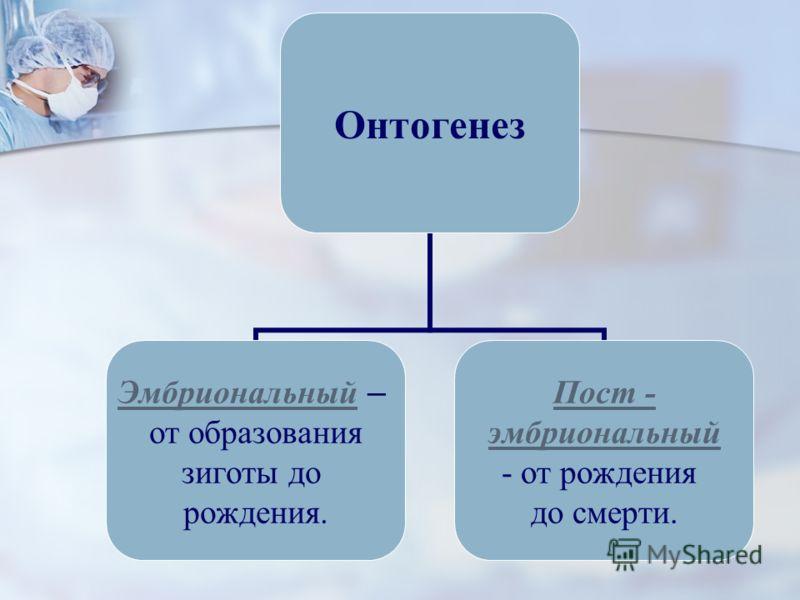 Онтогенез Эмбриональный Эмбриональный – от образования зиготы до рождения. Пост - эмбриональный от рождения до смерти.
