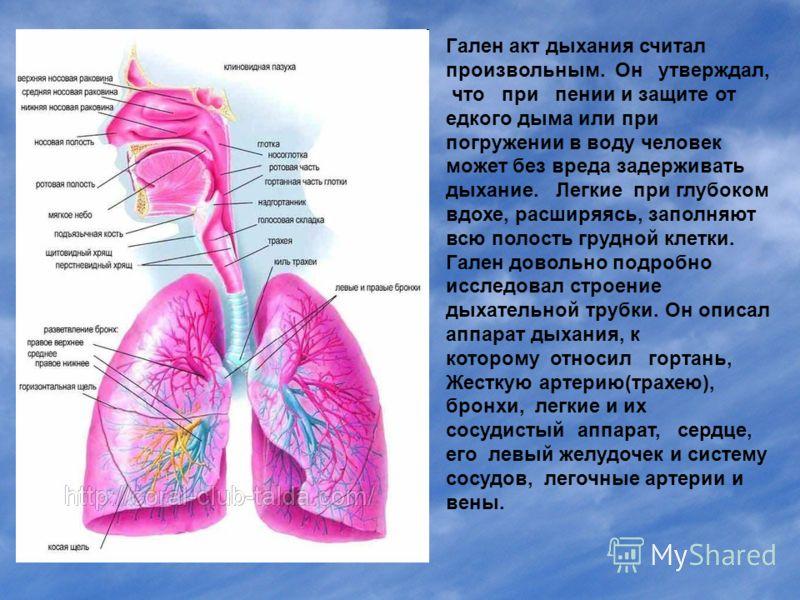 Гален акт дыхания считал произвольным. Он утверждал, что при пении и защите от едкого дыма или при погружении в воду человек может без вреда задерживать дыхание. Легкие при глубоком вдохе, расширяясь, заполняют всю полость грудной клетки. Гален довол